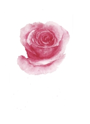 Rosa Espanola 2 001
