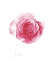 Rosa Espanola 3 001